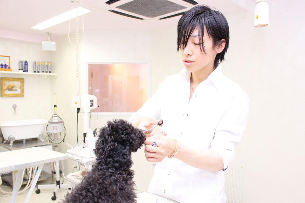 pet salon Dearest