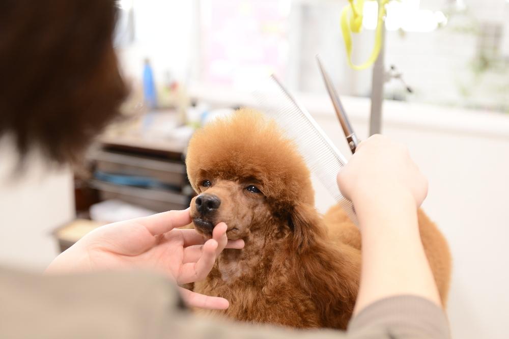 Dog Salon Jupiter(愛知県)