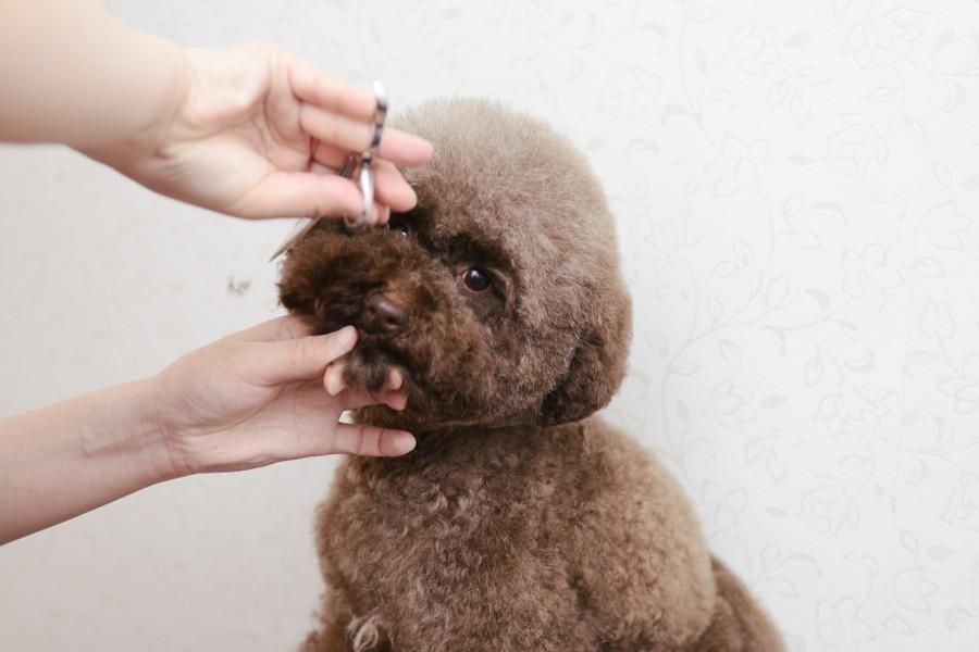 DOG TAIL(ペットサロン・トリミング)