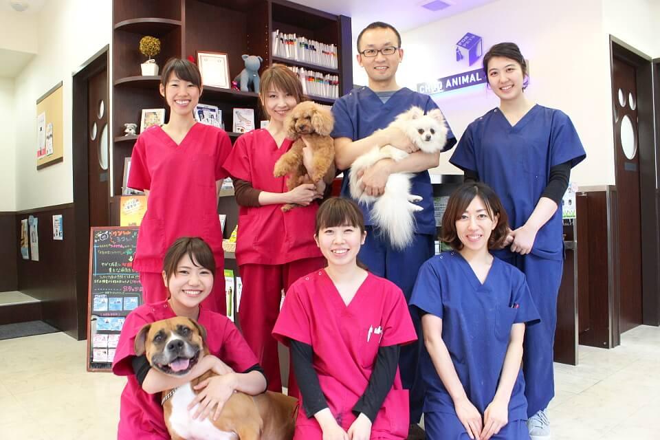 東京中央動物医療センター
