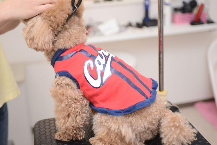 Canine Salon Tiara