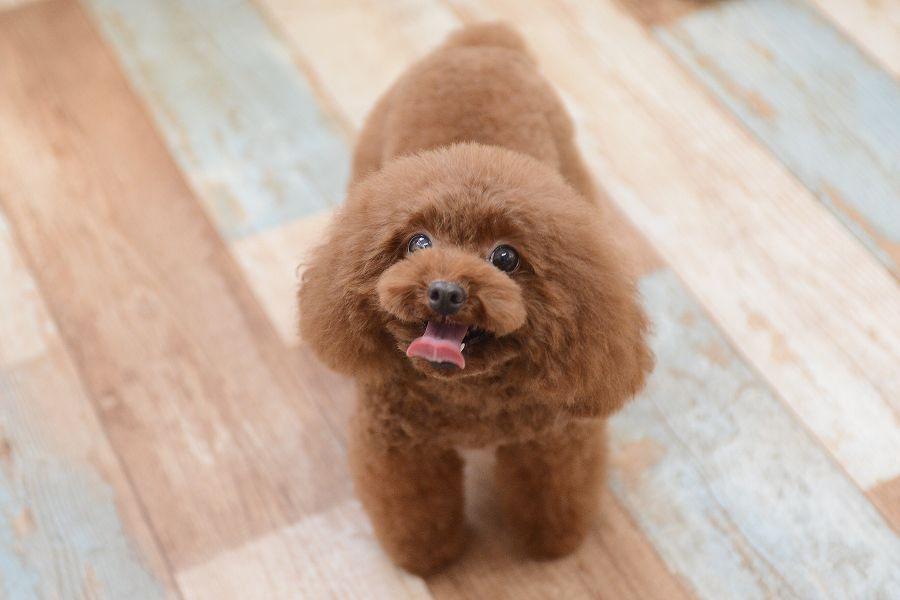 Dog Salon GuuN