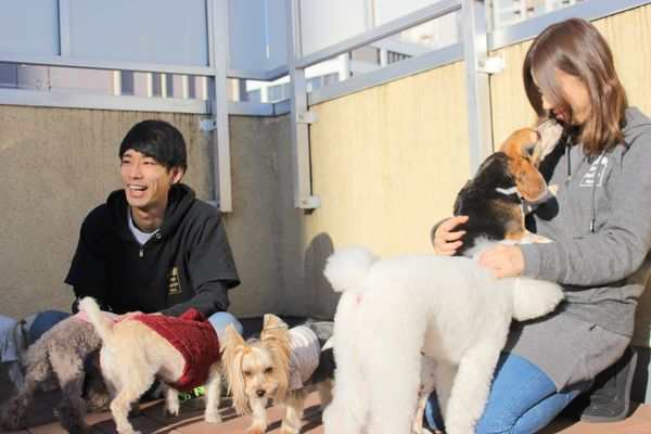 Dogs Day Care Japan ~犬の託児所~