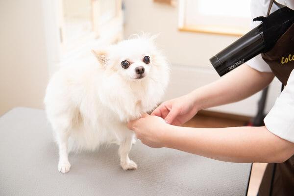 Dog salon CoCo(ペットサロン・トリミング)