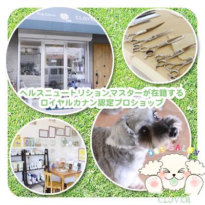 Dog Salon CLOVER