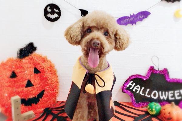 Dog Salon L