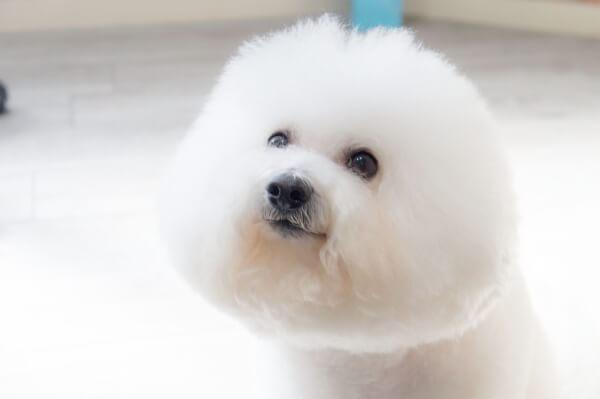 Dogsalon Bonita
