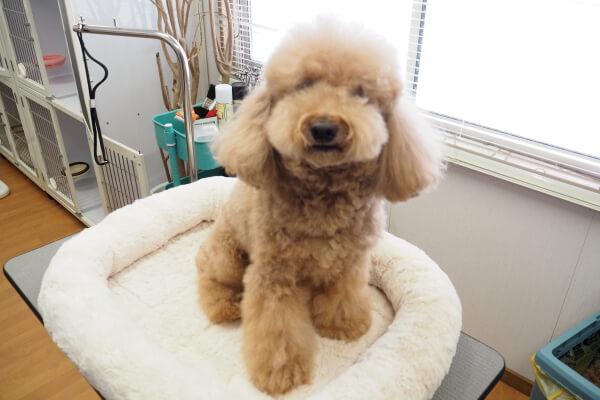 Pet Salon fluffy(ペットサロン・トリミング)