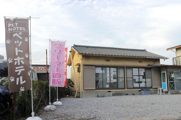 犬猫倶楽部 ウィズ 上尾店(ペットホテル)