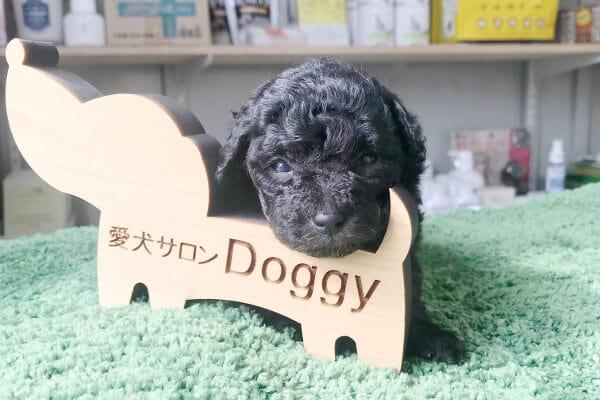 愛犬サロン Doggy