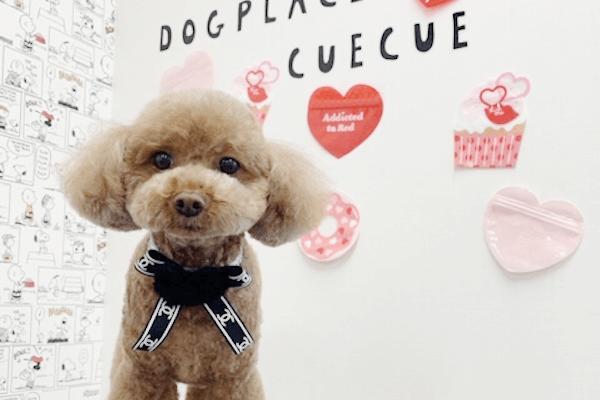 DogPlace cuecue