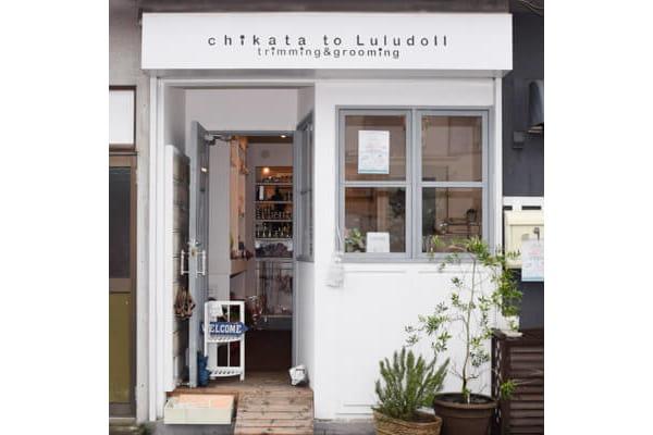 chikata to Luludollトリミング&グルーミング吉祥寺店